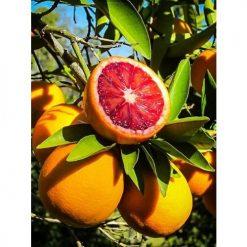 kan-portakalı
